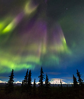 Aurora borealis swirl over the tundra and Mt Denali from the Wonder Lake campground in Denali National Park, Interior, Alaska