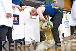 Denis O'Sullivan from Bonane at the All Ireland and International Sheep Shearing Championships.