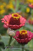 Gisela, FLOWERS, BLUMEN, FLORES, photos+++++,DTGK1910,#f#
