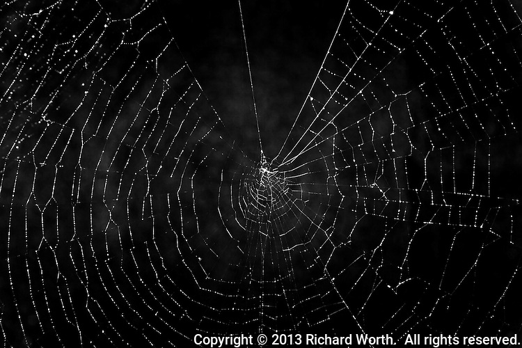 A spider web with water droplets sparkles against a black background with cloud-like puffs.