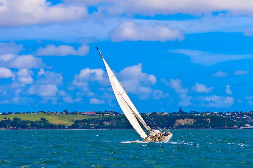 Sailboats sailing on Auckland Harbor (Waitemata Harbor), Auckland, New Zealand