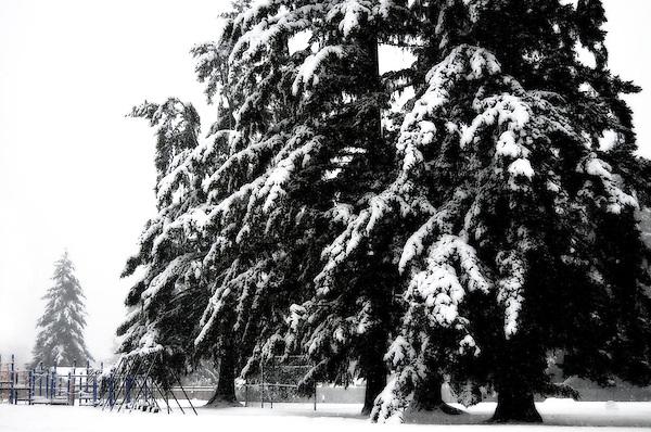 Christmas Snow Blankets Park, Moorlands park, Kenmore Washington