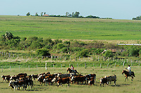 URUGUAY Bella Union, Gauchos auf Pferd arbeiten auf Rinderfarmen /<br /> URUGUAY Bella Union, Gauchos on horse at cattle farm