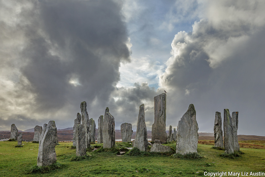 Isle of Lewis and Harris, Scotland: Hooded crow on the tallest stone with clearing storm clouds at the Callanish Standing Stones