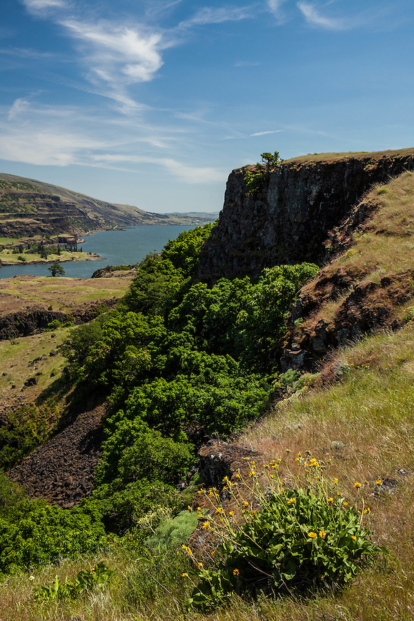 Trees grow at the base of a steep cliff face along the Columbia River Gorge in Oregon.