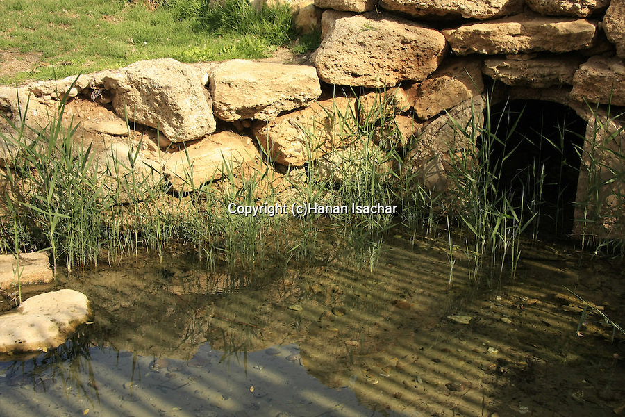 Israel, Besor region in the northern Negev. Besor spring in Eshkol National Park
