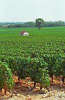 The Les Genevrieres vineyard in Meursault, Bourgogne