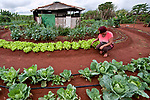 Imagem autorizada. Alimentos organicos. Lindaci Maria dos Santos Cortes na sua horta familiar, Lago Oeste. Distrito Federal. 2015. Foto de Sergio Amaral