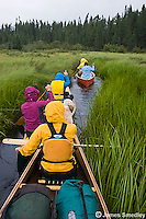 A group of people paddling their canoes through a grassy marsh.
