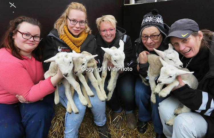 Foto: VidiPhoto<br /> <br /> ARNHEM - Vijf cli&euml;nten van zorgboerderij TokHok in Arnhem tonen dinsdag trots de zojuist geboren vijfling bij moeder Toppertje. Allemaal jongetjes. Hoewel een vijfling bij schapen niet uniek is, komt het slechts enkele malen per jaar voor. Voor TopHok is het zelfs de eerste keer in het bestaan van de zorgboerderij. In het voormalige tuincentrum in de Arnhemse wijk Geitenkamp worden diverse dieren gehouden, maar de schapenhouderij is het belangrijkste onderdeel. Inmiddels zijn er zeventien lammetjes geboren en er worden er in totaal tussen de 60-90 verwacht. Voor eigenaar Esther van Kemp (m) is het dan ook een drukke tijd met veel slaaptekort. Bedoeling is dat de lammetjes uiteindelijk in pan terecht komen. Lamsvlees is een van de streekproducten waarmee TopHok bovenregionale bekendheid heeft. Vanwege strenge Q-koorts-maatregelen mogen er tot lammetjesdag 17 maart geen andere gasten bij de lammetjes dan alleen de verzorgers.