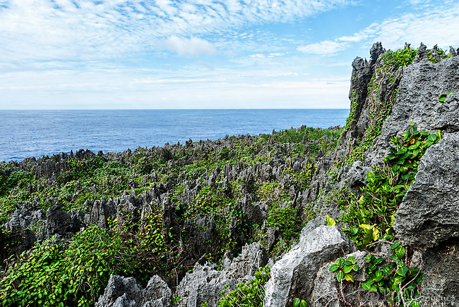 Coral pinnicles on Togo Chasm track on the island of Niue