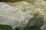 Israel, Shephelah, fossil conglomerate and white soft chalk rock in Tel Zafit