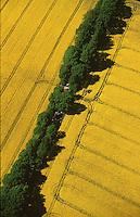 Deutschland, Schleswig- Holstein, Raps, Landwirtschaft, Baumreihe, Allee, Natur, Spuren