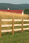 Fence tall Grass Red Barn Roof with Blue Ridge Mountains  Commonwealth of Virginia, Fine Art Photography by Ron Bennett, Fine Art, Fine Art photography, Art Photography, Copyright RonBennettPhotography.com ©