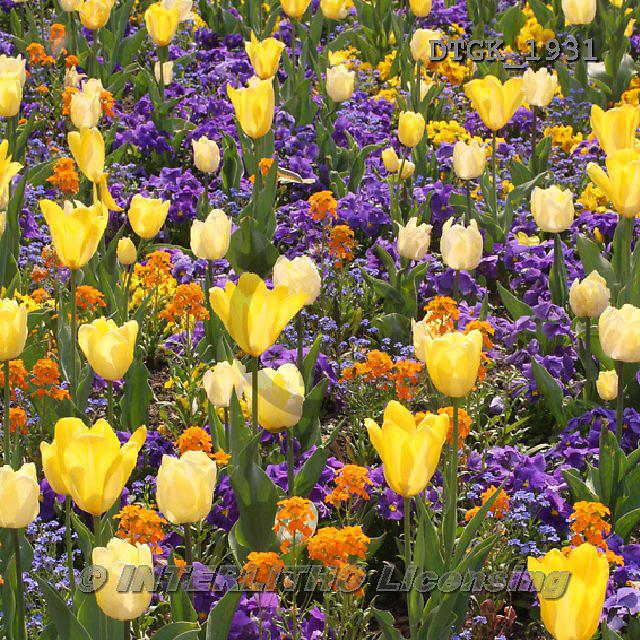 Gisela, FLOWERS, BLUMEN, FLORES, photos+++++,DTGK1931,#f#