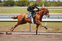 #24Fasig-Tipton Florida Sale,Under Tack Show. Palm Meadows Florida 03-23-2012 Arron Haggart/Eclipse Sportswire.