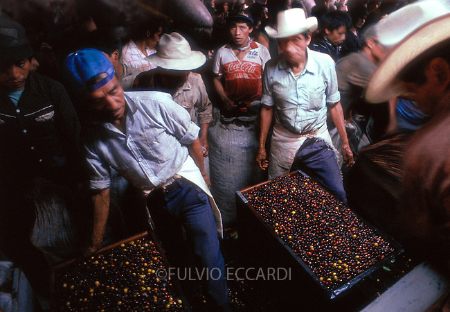 Mexico, Chiapas, depulping,, pulp, coffee, coffea, beans, organic, industry, machine, process, reception, separation, ripe, unripe, cherries, wash, wet, mill, worker, man, men, group