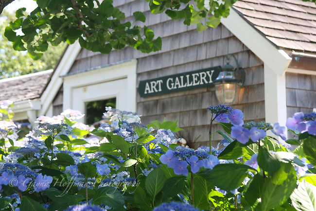 Art Gallery sign viewed over blue hydrangeas.