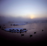 A lake filled with morning mist and snow during a hunting trip near Grand Island, Nebraska, Sunday, December 4, 2011. Hunting duck and White Tail deer is common in the area...Photo by Matt Nager
