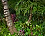Kauai, HI<br /> Tropical garden ferns and palms on Kauai's north shore near Ha'ena