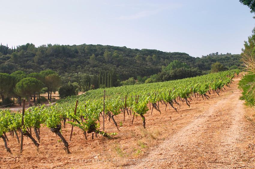Domaine du Mas de Daumas Gassac. in Aniane. Languedoc. The Peyrafioc vineyard, the first one planted, in 1972. France. Europe. Vineyard.