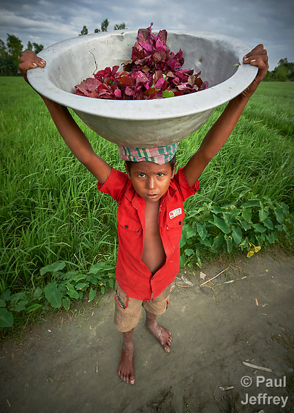 A boy carries leaves in a pan in Kunderpara, a village on an island in the Brahmaputra River in northern Bangladesh.