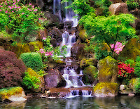 Waterfall with azaleas and rhododendrons. Japanese Gardens. Portland, Oregon.