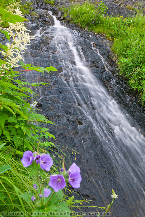 Wild geranium and waterfall, Prince William Sound, Alaska