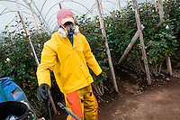 A worker prepares the pesticide spraying at a flower farm in Cayambe, Ecuador, 29 June 2010. South American countries (Colombia and Ecuador) are world leaders in cut flower industry. The advantage of the moderate sunny climate, very cheap labor force in combination with the absence of social laws and environmental regulations have created perfect conditions for the cut flower production. Flower growing is very fragile and necessarily depends on irrigation and chemical maintenance, provided by highly toxic pesticides. About 50.000 workers in Ecuador, working mainly for living minimum wage, keep the floral industry going and saturate the market generated by consumerist culture the US, Canada and Europe.