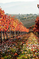 Autumn scene in the Montefalco wine district of Umbria, Italy
