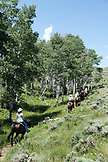 USA, Wyoming, Encampment, horses and riders wander through an aspen grove