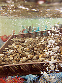 USA, California, bags of fresh oysters for sale at Hog Island Oysters, Tomales Bay