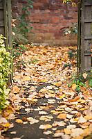 Yellow autumn leaves in backyard