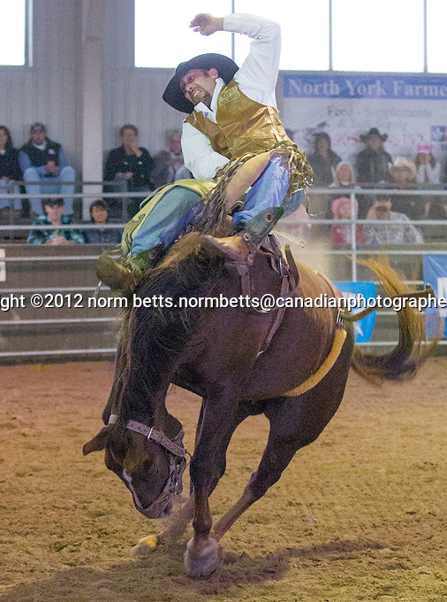 RAM Rodeo finals, 19-21 Oct'12.Newmarket, Ongario Canada.photo: Norm Betts .©2012, norm betts photographer.tel 416 460 8743.normbetts@canadianphotographer.com
