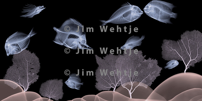 X-ray image of a sea scene (color on black) by Jim Wehtje, specialist in x-ray art and design images.