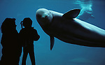 Mother and daughter silhouetted against aquarium glass face to face with a Beluga whale at the Point Defiance Zoo, Tacoma, Washington State  USA