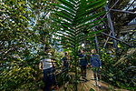 March 10th, 2018 &mdash; Seattle, WA, USA<br /> <br /> <br /> The Amazon Spheres are three spherical conservatories on the headquarters campus of Amazon in Seattle, Washington, US. Designed by NBBJ, the three glass domes are covered in pentagonal hexecontahedron panels and serve as an employee lounge and workspace. The domes, which range from three to four stories tall, house 40,000 plants as well as meeting space and retail stores. They are located under the Day 1 building on Lenora Street. The complex opened to Amazon employees and limited public access on January 30, 2018. The spheres are reserved mainly for Amazon employees, but are open to the public through weekly headquarters tours and an exhibit on the ground floor.<br /> <br /> The plants inside were laid out and designed by Seattle landscape architects, Site Workshop. The spheres have 40,000 plants from 50 countries and are divided into three areas, with the western and eastern domes segregated into the Old World and New World.The domes are kept at a temperature of 72 &deg;F (22 &deg;C) and 60 percent humidity during the daytime. Amazon employed a full-time horticulturalist to grow the building's 40,000 plants over a three-year period at a greenhouse in Redmond. Amazon donated space in the greenhouse to the University of Washington's botany program during renovation of their Life Sciences Building in 2016. Among the 40 to 50 trees in the spheres, the largest is a 55-foot (17 m) Ficus rubiginosa tree, nicknamed &quot;Rubi&quot;, which was lifted into the spheres by a crane in June 2017.<br /> <br /> Photograph by Stuart Isett. &copy;2018 Stuart Isett. All rights reserved.
