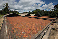 Produção, colheita e estocagem de cacau organico nordeste do estado<br /> Tomé Açú Pará, Brasil.<br /> Foto Carlos Borges<br /> 11/05/2016 Cooperativa Agrícola Mista de Tomé Açú