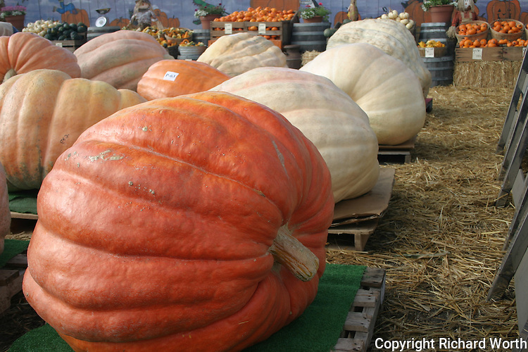 Giant pumpkins arrive for display and maybe sale at Pumpkin Depot in Half Moon Bay.