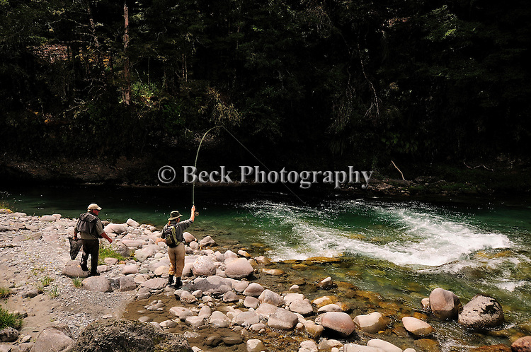 South Island New Zealand, small stream fly fishing
