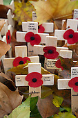 LONDON, ENGLAND - Poppies and Crosses on Field of Remembrance at Westminster Abbey