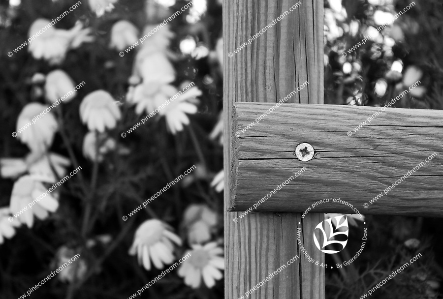 End of a beautiful wooden fence with flowers in background black and white stock photo.<br />