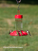 01162-12818 Ruby-throated Hummingbirds (Archilochus colubris) at Dr. JB's Hummingbird Feeder, Marion County, IL