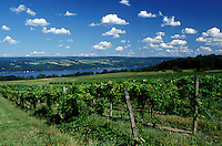 winery, vineyard, Finger Lakes, Seneca Lake, NY, New York, Dundee, Scenic view of Glenora Wine Cellars vineyards overlooking Seneca Lake.