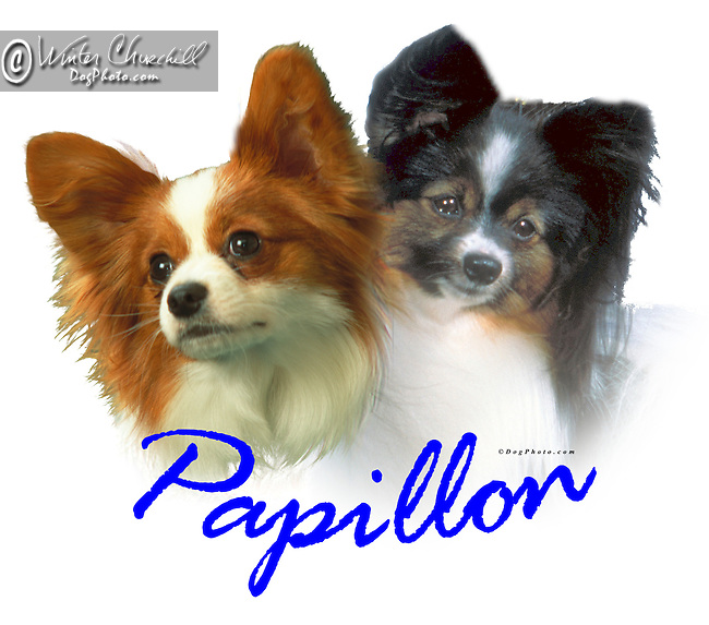 Papillon This design is offered on gift merchandise ONLY.<br /> <br /> You'll find all the merchandise options listed IN THE CART so add a design to your shopping cart first. All merchandise item are shipped straight to you from our lab in Dallas, Tx.