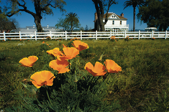 Nickle and Nickle winery, tasting room, offices with California poppies.