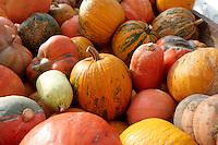 Fresh whole pumpkins and squash