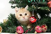 Kim, CHRISTMAS ANIMALS, photos, GBJBWP18581,#XA#
