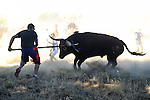 A man stabs the bull during 'Toro de la Vega' festival, on September 17, 2013 in Tordesillas. The festival is one of the oldest in Spain with roots dating back to the fifteenth century. The bull has to be enticed across the river from the village to the plain 'Vega' before it can be killed to honour the 'Virgen de la Pena'. © Pedro ARMESTRE.