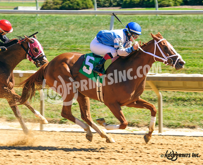 She's Going Strong winning at Delaware Park on 9/12/16